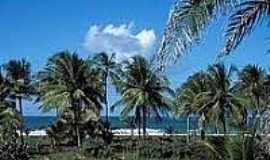 Praia dos Algodões - Coqueiros na Praia dos Algodões-Foto:ecoviagem.