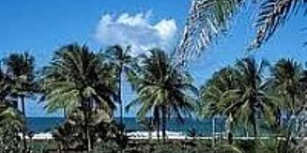 Coqueiros na Praia dos Algodões-Foto:ecoviagem.