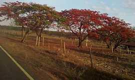 Missão de Aricobé - Missão de Aricobé-BA-Flamboyants na estrada de Missão-Foto:vagno vilas boas