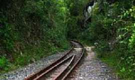 Oliveira dos Campinhos - Oliveira dos Campinhos-BA-Ferrovia no meio da mata-Foto:flordeli.blogspot.com