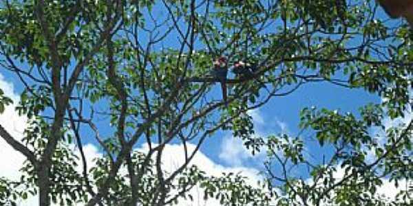 Águas do Miranda-KM 21-MS-A Fauna e a Flora-Foto:www.facebook.com