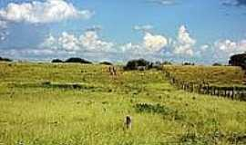S�tio do Mato - Vegeta��o na �rea rural em S�tio do Mato-Foto:wikip�dia