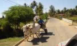 Tabocas do Brejo Velho - Carro de boi em Tabocas do Brejo Velho-Foto: leydynha