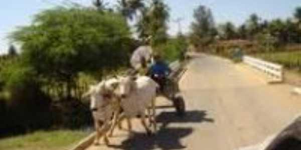 Carro de boi em Tabocas do Brejo Velho-Foto: leydynha