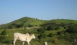 Limoeiro de Anadia - Pastagem em área rural de Limoeiro de Anádia-AL-Foto:Cinza