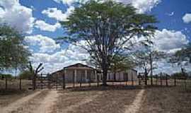 Teofilândia - Área rural-Foto:Rafael Olimpio