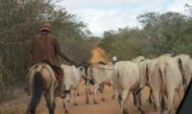 Triunfo do Sincorá - Vaqueiros, Por Cezar Costa