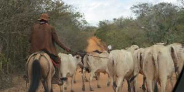 Vaqueiros, Por Cezar Costa