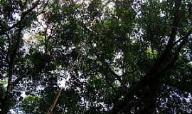 Maceió - Maceió-AL-Parque Nacional de Maceió-Foto:alagoasqueamo