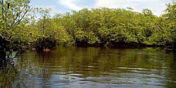Una-BA-Mangue no Rio Acuípe-Foto:ziuender zulmir capato