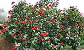 Utinga - Flores da Serra da Atalaia