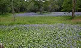 Valente - Valente-BA-Belo jardim no brejo-Foto:Jorge LN