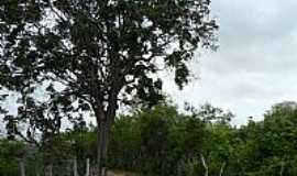 Valente - Valente-BA-Curva do Carrancudo, estrada rural-Foto:Jorge LN