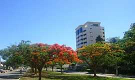 Vitória da Conquista - Vitória da Conquista-BA-Flores da Avenida Brasil-Foto:MARCELO S F