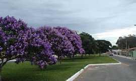 Vitória da Conquista - Vitória da Conquista-BA-Quaresmeiras floridas na Av.Brasil-Foto:Marcelo S F