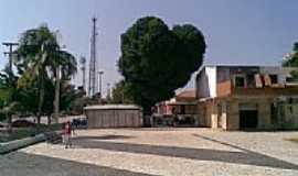 Acaraú - Mangueira em formato de coração na Praça Centenário em Acaraú-CE-Foto:ArthurVascc