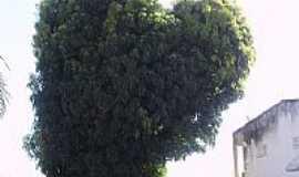 Acaraú - Mangueira em formato de coração na Praça Centenário em Acaraú-CE-Foto:THIAGO13SS