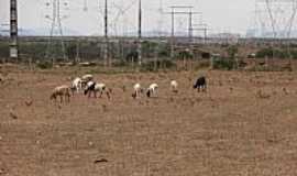 Maravilha - Maravilha-AL-Pastagem junto as Torres-Foto:Barco do espaço Leite