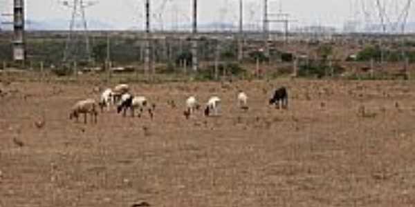 Maravilha-AL-Pastagem junto as Torres-Foto:Barco do espaço Leite