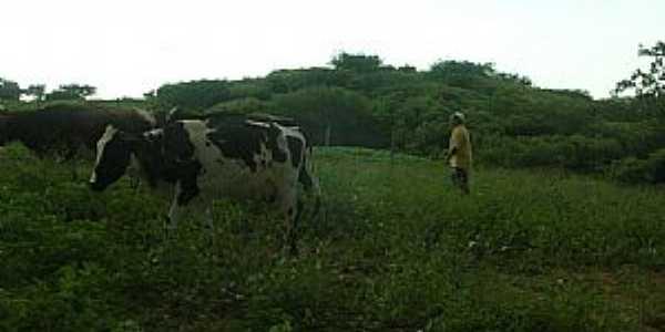 Amaniutuba-CE-Imagem rural-Foto:jairogomes