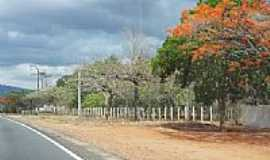 Aracoiaba - Flamboians floridos na avenida em Aracoiaba-CE-Foto:andre pimentel