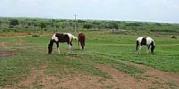 Vista parcial da Fazenda Haras Sol Nascente-Foto:JOSÉ FERREIRA