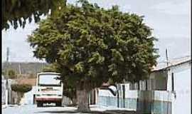 Caio Prado - Rua de Caio Prado-Foto:caioprado
