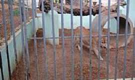 Canindé - Onça no Zoológico de São Francisco em Canindé-CE