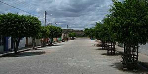 Olho D��gua das Flores-AL-Rua arborizada-Foto:Nilson Barbosa