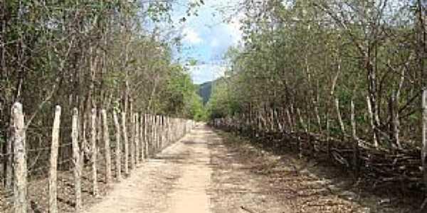 Coreaú-CE-Estrada para o Sítio Penedo-Foto:Benedito Gomes Rodrigues