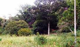 Córrego dos Fernandes - Córrego dos Fernandes-CE-Floresta florida-Foto:ferros.iclaz.com.br