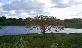 Palmeira dos Índios - Palmeira dos Índios-AL-Açude-Foto:Cristiano Soares