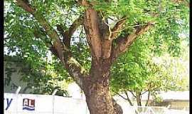 Palmeira dos Índios - Palmeira dos Índios-AL-Árvore centenária em frente a E.E.Estado de Nova Jersey -Foto:Cristiano Soares