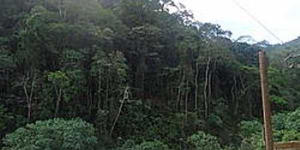 Gado dos Rodrigues-CE-Mata no Distrito-Foto:Wikipedia