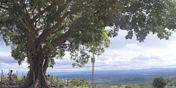 Gameleira de São Sebastião-CE-Gameleira; árvora frondosa que batiza o povoado-Foto:cariricangaco.