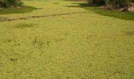 Ic� - Ic�-CE-Lago da Barragem de Pedra coberto de plantas aqu�ticas-Foto:helio freire da silva
