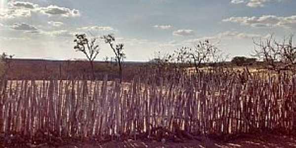 Ipueiras dos Gomes-CE-Cêrca de bambu-Foto:Johnson Vargas