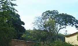 Jamacaru - Ladeira de Santa Cruz-Foto:Vilrj