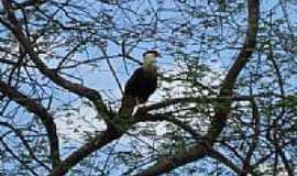 Juatama - Guardião da Pedra dos Ventos-Foto:Herlanio Evangelista