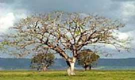 Pilar - Área rural de Pilar-Foto:OPA_AL