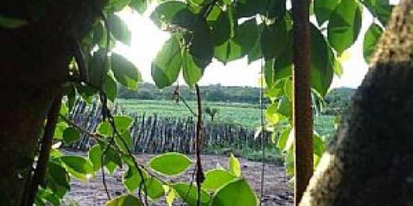 Manituba-CE-Vista de área rural-Foto:Facebook