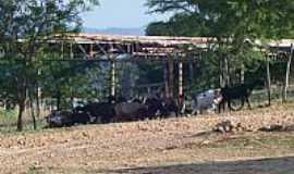 Mapuá - Mapuá-CE-Área rural-Foto:Assis Cavalcante