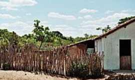 Oiticica - Área rural-Foto:Krewinkel-Terto de A…