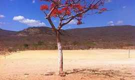 Pindoguaba - Pindoguaba-CE-Árvore solitária no deserto-Foto:blogdapetinha.blogspot.com