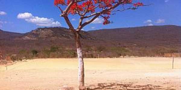 Pindoguaba-CE-Árvore solitária no deserto-Foto:blogdapetinha.blogspot.com