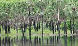 Pitombeira - Carnaúbas da Barragem-Foto:edaparicio