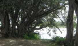 Quixeré - Rio das Cruzes Boqueirão - árvore centenária, Por Lucilene Brito