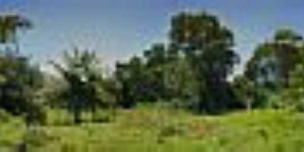 Vegetação do mangue-Foto:Charles Northrup