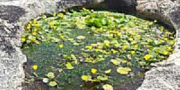 Po�o na pedra em Caldeir�es, Saboeiro-CE-Foto:Thiago dos Passos