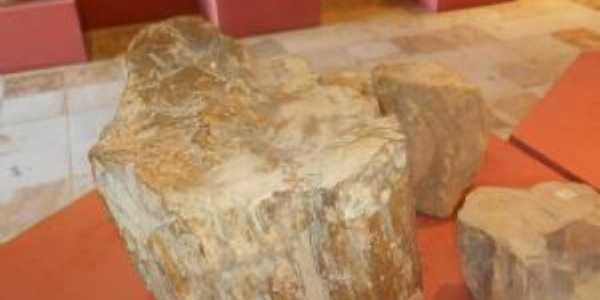 madeira fossilizada, Por jose juraci almeida